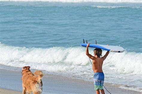 friendly beaches in florida pet friendly near cocoa fl p wall decal