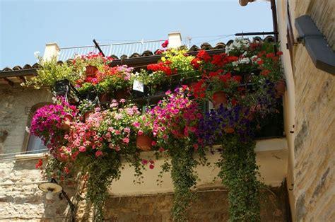 fiori per balconi soleggiati balcone fiorito come abbellirlo al meglio arredo giardino