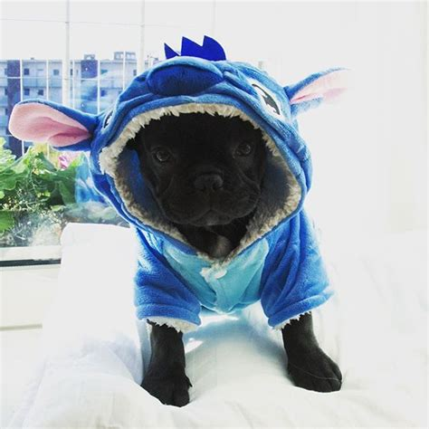 for my awesome bulldogs infinity 25 best ideas about bulldog costume on baby