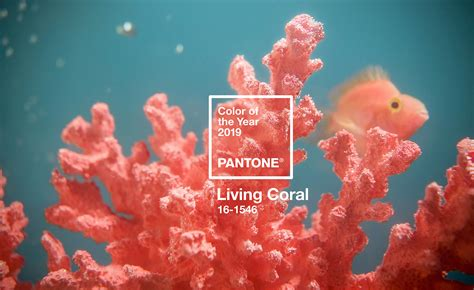 color of the year pantone the pantone colour of the year 2019 is living coral