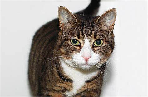 a cat adoption