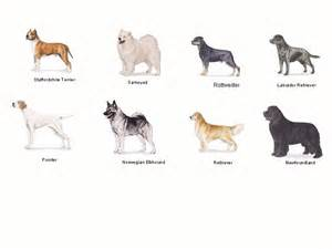 Types Of Dogs Types Of Dogs Wwii