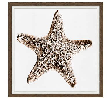 pottery barn starfish rug neutral starfish canvas pottery barn