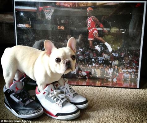 jordans dogs charles barkley the bulldog becomes instagram favorite as he is pictured