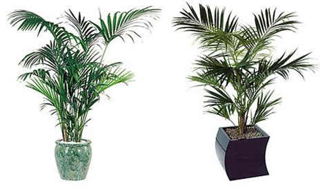 where can i purchase artificial trees on cape cod artificial plants ambius south africa