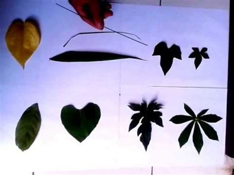 wallpaper daun momiji koleksi gambar animasi bergerak daun jatuh terbaru 2018