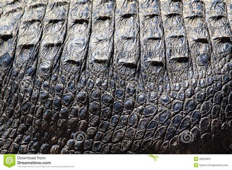 alligator skin stock image image  textile abstract