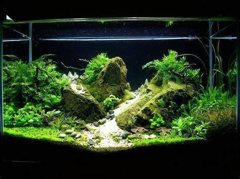 Aquascaping Forum by Fluval Edge 2 Aquascaping Einsteiger Aquascaping Forum