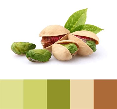pistachio color 25 best ideas about pistachio color on mint