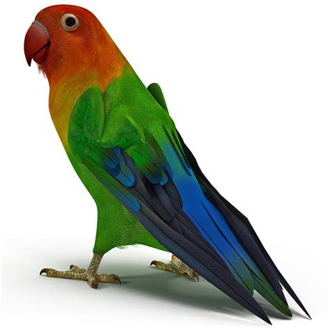 Special Best Free 3d love bird animation clipart best