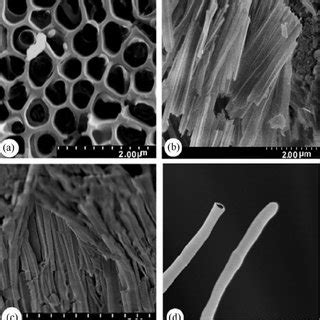 Sem Images Of Hpt Pmma Nanostructure With A Diameter Of 200 Nm A Download Scientific Porous Alumina Template