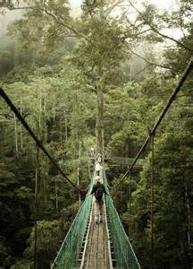 What Is A Canopy In The Rainforest by Rainforest Canopy Walkway Borneo Amazing Places