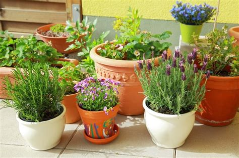 how to grow a herb garden in pots 10 easy kitchen herb garden ideas to grow culinary herbs