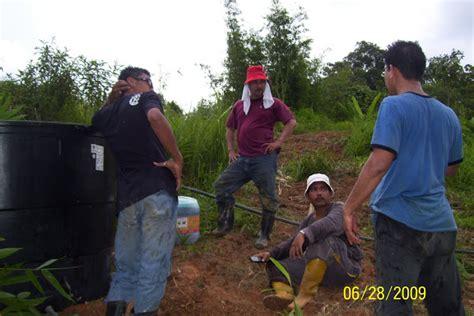 Furadan Racun Babi welcome to nusarhu agrotek kerja2 penyediaan tanah bermula