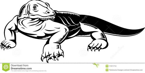 monitor lizard coloring pages komodo dragon monitor lizard stock images image 11311714