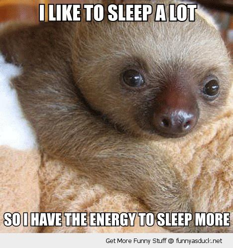 Baby Sloth Meme - cute baby animal quotes quotesgram