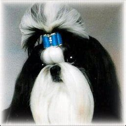 shih tzu show bows bows and the power of color by doggie bow ties