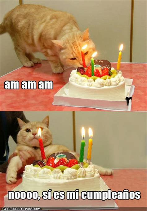 imagenes divertidas de tortas de cumplea 241 os imagui humor gr 225 fico imagenes de cumplea 241 os muy graciosas
