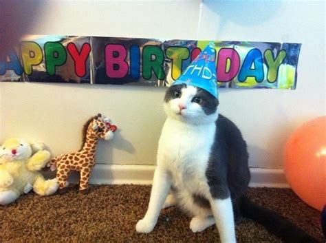 cat birthday friend posted this on for cats 1st birthday