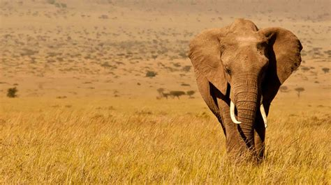 In Kenya kenya in september world safaris