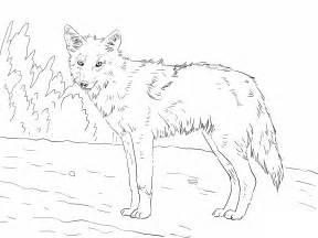 coyote color free printable coyote coloring pages for