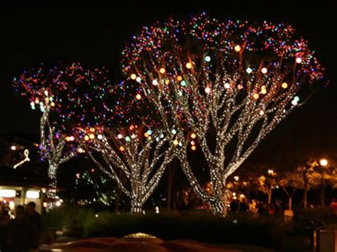 Mouseplanet Disneyland Park Update By Adrienne Vincent Disney Tree Lights