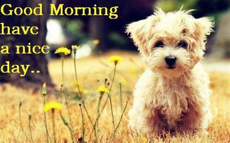 morning puppy morning puppy signs puppys what type and morning