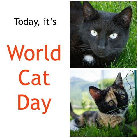 world cat world cat day the swiss cats