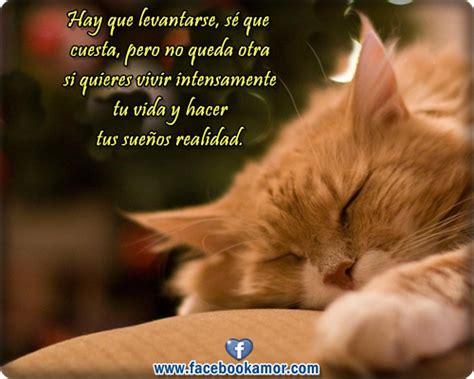 imágenes más asquerosas imagenes bonitas de gato durmiendo con frases para