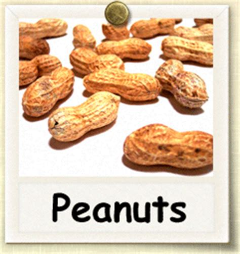 how to grow peanuts an easy guide for gardening beginners how to grow peanuts guide to growing peanuts