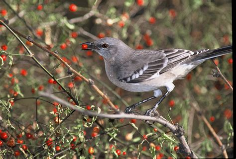 scientists develop new method for tracking seed dispersal