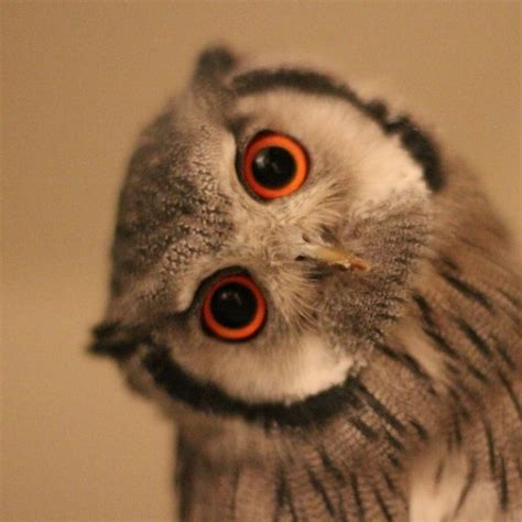 owl head tilt tattoo 2 inspiration pinterest