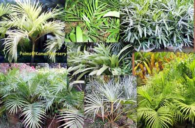 decorative plants with name in india indoor decorative plants in india