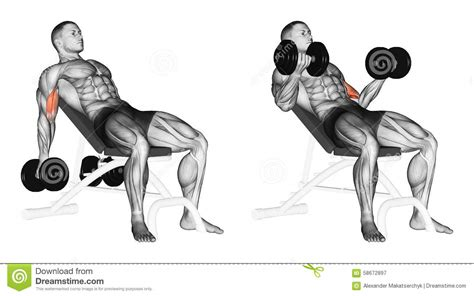 dumbbell bicep curl incline bench biceps for beginners xfsport