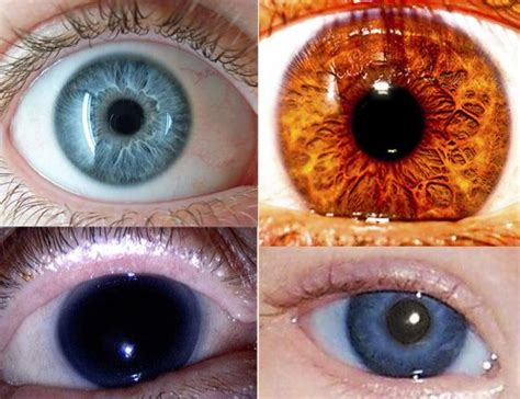 rarest color human eye colors aqua black hazel green is
