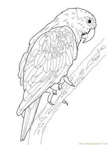 realistic bird of paradise bird coloring pages