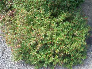 exotic shrubs the trees flowers of whangarei