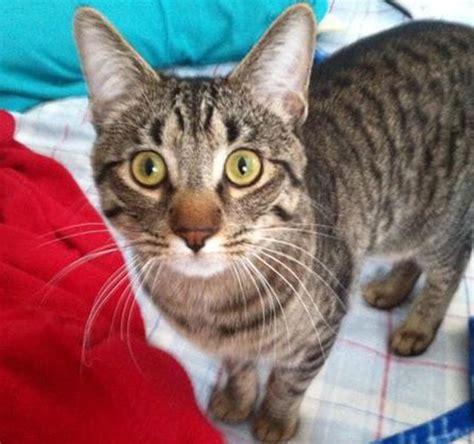 gatos en casa un gato sobrevive despu 233 s de estrellarse un helic 243 ptero