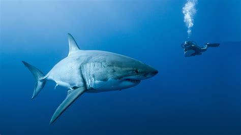 Best Resume Joke by Shark In Modern Culture Sharks In Culture