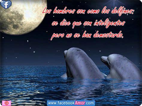 imagenes de amor animadas de delfines imagenes de delfines con frases etiquetar en facebook