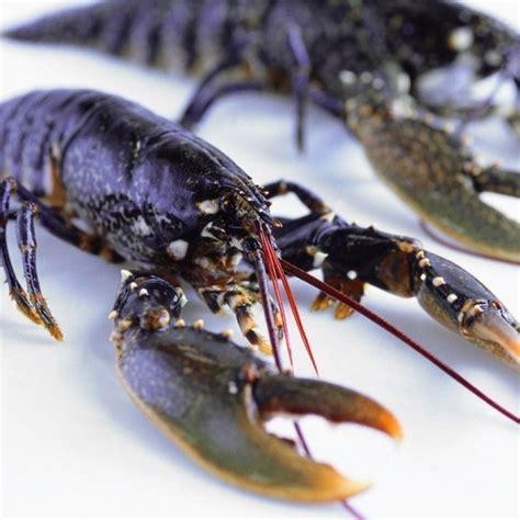 homard tout sur le homard id 233 es cuisine au homard