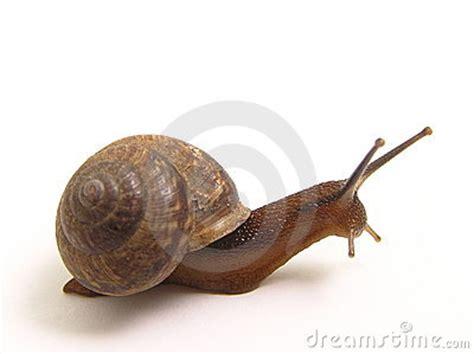 imagenes animales que se arrastran el caracol se arrastra foto de archivo imagen 2413900