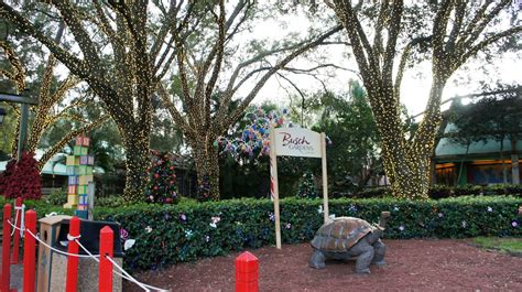 Town Busch Gardens Tickets by Busch Gardens Ta Trip Report December 2013