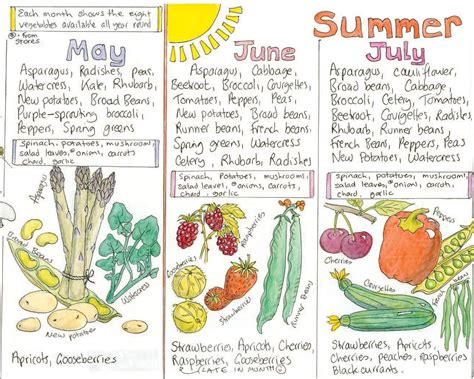 Summer Naturals Product Ethically Packaged by The Store Organic Garden And Gardening Ethical
