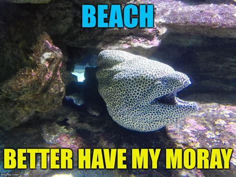 Eel Meme - moray eel imgflip