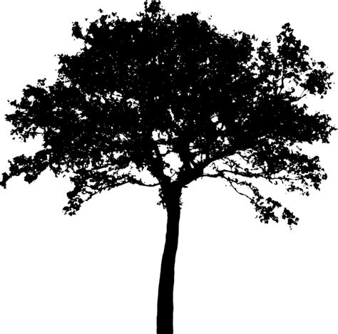 tree silhouette clip art at clker com vector clip art
