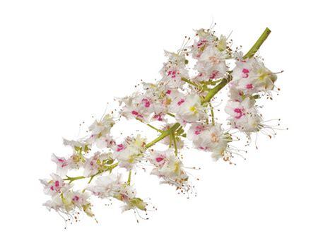 fiori castagno agrimontana miele italiano di fiori di castagno