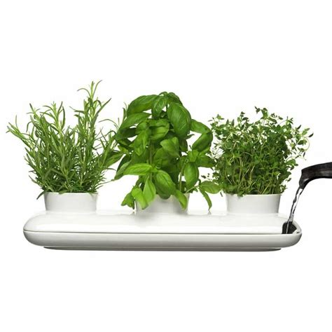 herb pots sagaform s trio herb pot contemporary way to grow fresh