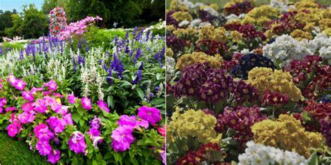 fiori da giardino foto piante da giardino i nostri consigli roba da donne