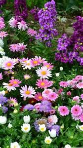 garten app flowers garden wallpapers for mobile phone apps